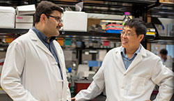 Dr. Mehrotra (left) and Dr. Yu (right)